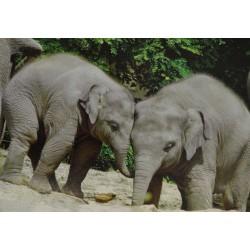 Carte 15 x 10,5 cm Eléphants