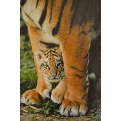 Carte 15 x 10,5 cm Bébé tigre